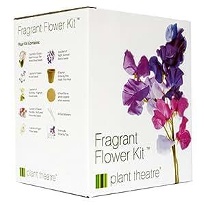 Plant Theatre Kit Fragrant Flowers – 6 wunderbare duftende Sorten zum Anbauen – ein großartiges Geschenk