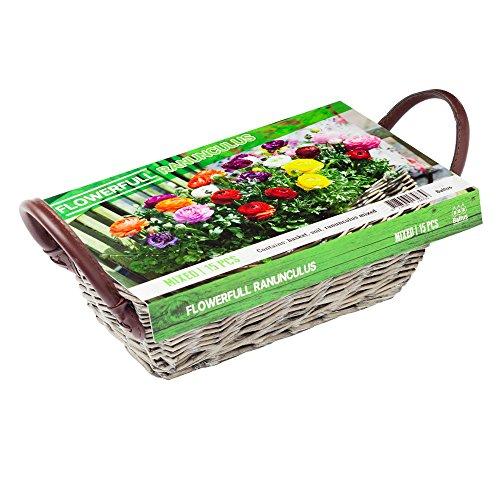 Flowerfull Ranunculus Mix Ranunkel-Samen Saatgut Blumensamen Garten Pflanz-Set notrash2003