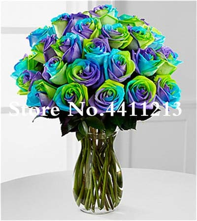 Bloom Green Co. 100 Pcs/bag Chinese Rainbow Rose Flower Rose Bonsai Tree Plant Chinese Roses Mix Colors Give Lover Plant for Home Garden: 11