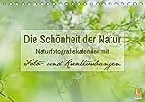 Die Schönheit der Natur - Naturfotografie-Kalender mit Foto- und Kreativübungen (Tischkalender 2019 DIN A5 quer): Traumhafte Naturfotos mit Foto- und ... 14 Seiten ) (CALVENDO Hobbys)