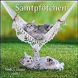 Samtpfötchen 2019 - Broschürenkalender - Wandkalender - Katzenkalender - mit herausnehmbarem Poster - Format 30 x 30 cm