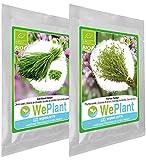 BIO Ciboulette & Thym - Graines de plantes aromatiques/Intérieur & Extérieur