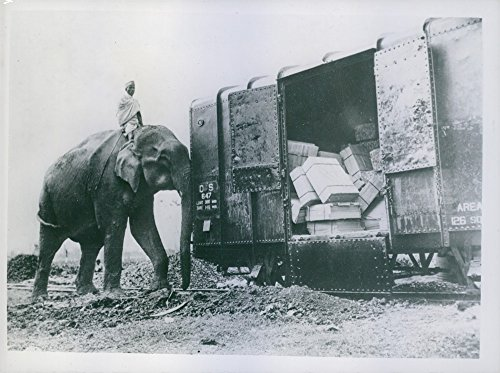 vintage-photo-of-the-trunk-linepushing-his-weight-around-is-this-60-year-old-elephanthe-is-shunting-