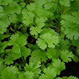 #10: Coriander Panipat Indian Vegetable Desi Seeds Summer Variety (Buy 1 Get 1 Free) By Kraft Seeds
