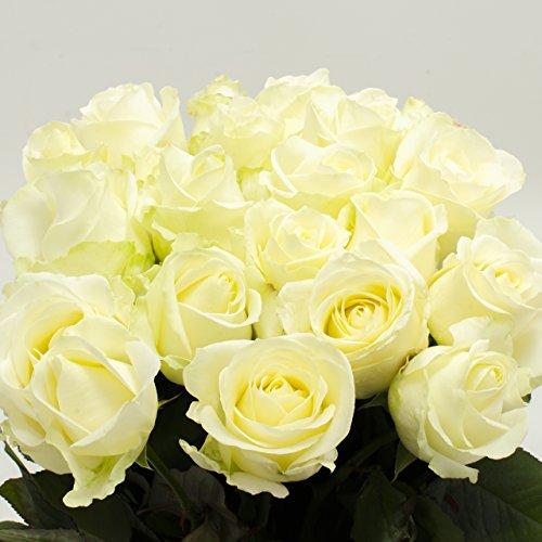 20-weisse-rosen-im-bund-ca-50-bis-60cm-frisch-vom-gartner-sehr-gut-geeignet-als-geschenk-zum-valenti