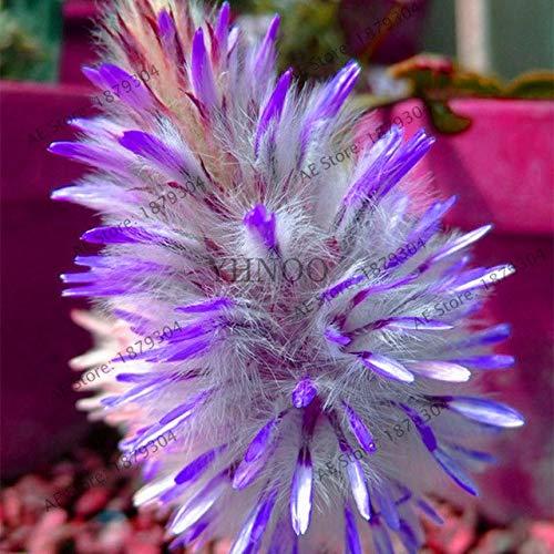 pinkdose importati giardino ornamentale erba, erba coda di volpe australiano, facile da coltivare, bonsai pianta da vaso per 200pcs domestiche del cortile: 1