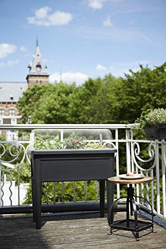 Elho 2055261 Green Basics Table de Culture Noir Taille XXL 75 x 36 x...
