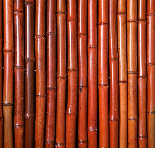 Sichtschutz Aus Bambusmatte - 1,8m x 1,9m - Rot, PapillonTM