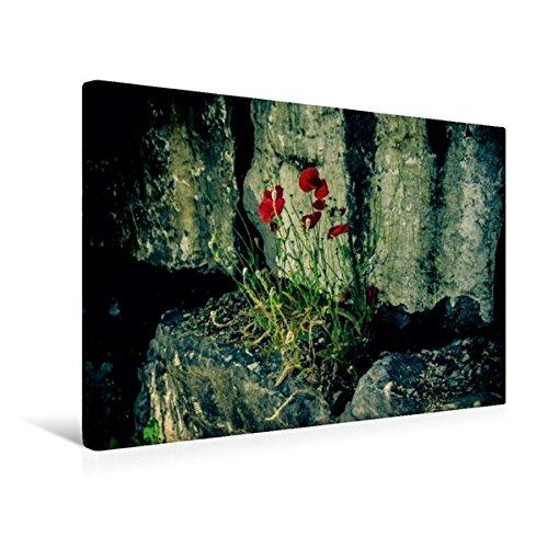 Impressionen Roter Mohn (Calvendo Premium Textil-Leinwand 45 cm x 30 cm quer, Wilder Mohn als Mauerblümchen | Wandbild, Bild auf Keilrahmen, Fertigbild auf echter Leinwand, Leinwanddruck: Wildwuchs Natur Natur)