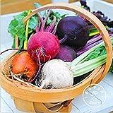 Fash Lady Neue Samen 2015!Seltene Rote-Bete-Samen - MIX-Farben - SIX VARIETIES - Heirloom Bio-Samen Gartendekoration Pflanze 20 Stück/Beutel, 82M