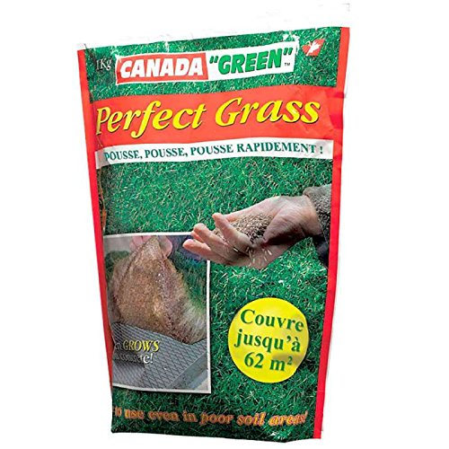 Gazon canada green perfect grass 1kg