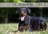 Dobermann 2018 (Wandkalender 2018 DIN A2 quer): Eleganz auf 4 Pfoten (Monatskalender, 14 Seiten ) (CALVENDO Tiere) [Kalender] [Apr 01, 2017] Mirsberger www.tierpfoto.de, Annett