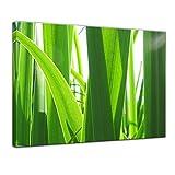 Bilderdepot24 Kunstdruck - Gras - Bild auf Leinwand - 60 x 50 cm - Leinwandbilder - Bilder als Leinwanddruck - Wandbild Pflanzen & Blumen - Grashalme im Sonnenlicht