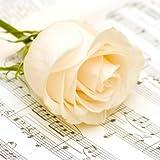 20 Servietten Weiße Rose auf Noten/Blumen/Hochzeit 33x33cm