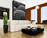 Best Nature Made Hierbas - Bilderdepot24 Fotomural Nature - Negro Blanco 60x90 cm Review