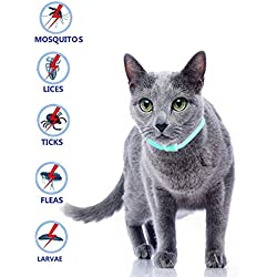 Beste Band El Mejor Collar de garrapatas para Perros y Gatos Pequeños, medianos y Grandes, Impermeable, Protección contra pulgas y garrapatas Natural Protección eficaz contra Las pulgas (para Gato)