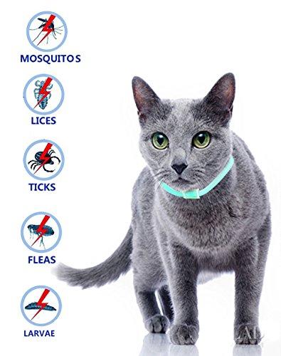 Pulci e zecche collare cane collare antipulci pulci e zecche collare per gatti regolabile impermeabile proteggere per gatti, smette di mordere e prurito, uccide le uova di insetti (per gatto)