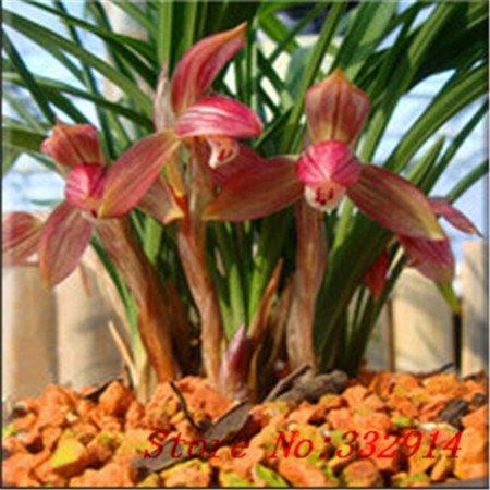 Vistaric Venta caliente de la venta!100 unids/bolsa Rare Chinese Cymbidum Semillas 20 variedades Bonsai Semillas de flores Jardín Novela Plantas Anti-Radiación