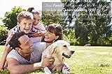 Marlii Hundebürste | Katzen-Bürste | Premium Wohlfühl Unterfell-Bürste für Mittel bis Langhaar | Enthaarungs- & Entfilzungs- Bürste | Massage Hundekamm für gesundes & strahlendes Fell | 100% Marlii-Zufriedenheitsgarantie + Gratis Fellpflege E-Book - 6
