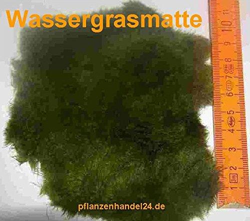 Mühlan Wasserpflanzen 6 Matten Unterwasserrasen, Größe je Matte min. 5x7 cm, Wassergras, natürlicher Filter -