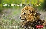 Geheimnisvolle Natur - Premiumkalender 2019 - Harenberg-Verlag - Tageskalender mit 365 faszinierenden Fotografien - Pro Tag eine Seite - 23 cm x 17 cm - Tischkalender