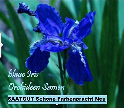 Pflanzen Iris (20x Blaue Iris Orchideen Samen Blume Blumensamen Pflanze Saatgut Rarität Garten innen und außen Neuheit #61)