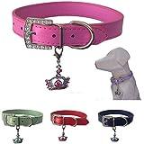 Lushpetz Hundehalsband mit Krone Charme Erhältlich in Rosa, Blau, Rot, Grün, Weiß oder Lila für XS, Kleine, mittlere und große Rassen (Klein, Hot Pink)