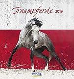 Traumpferde (PK) 233819 2019: aufstellbarer Postkartenkalender