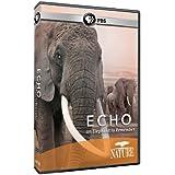 Echo: An Elephant to Remember [DVD] [Region 1] [US Import] [NTSC]