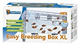 Superfish Easy Breeding Box (Aufzuchtbecken) XL
