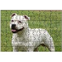 Staffordshire Bull Terrier (Bianco) grande puzzle 96pezzi