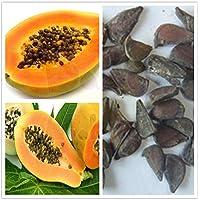 Exótico al por mayor de Carica papaya 10 semillas/pack orgánico fresco Papaya Semillas Señora roja