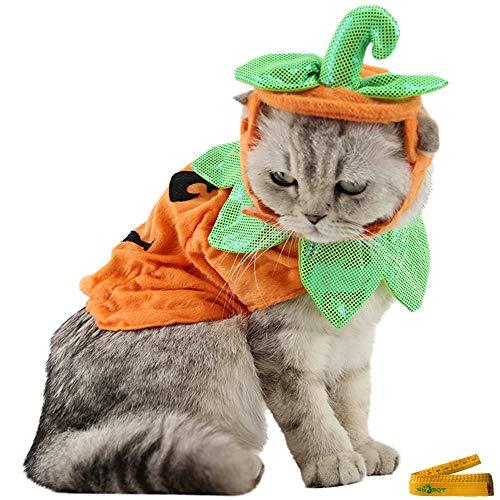 Wiz BBQT Verstellbares Halloween-Kostüm für Katzen und Kleine Hunde (Hund Kleine Halloween-kostüme Extra)