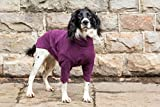 HOTTERdog by Equafleece­® Fleece Dog Jumpers - Sizes XS - XL Colours Grape & Green - Keep Your Dog Warm, Dry, and Comfortable (L, Grape)