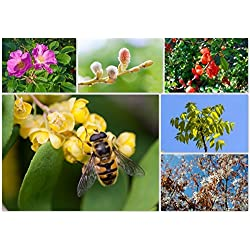 Vitamine für die Biene - Bienennährgehölze im Topf/Container