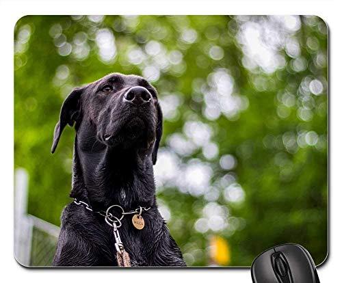 Gaming-Mauspads, Mauspad, Hundekopf Naturschnauze Deutsche Dogge Maulkorb EIN Hybrid