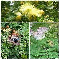 Acacia Silk seme-set 3 varietà, piante esotiche di sonno per il vostro giardino !!