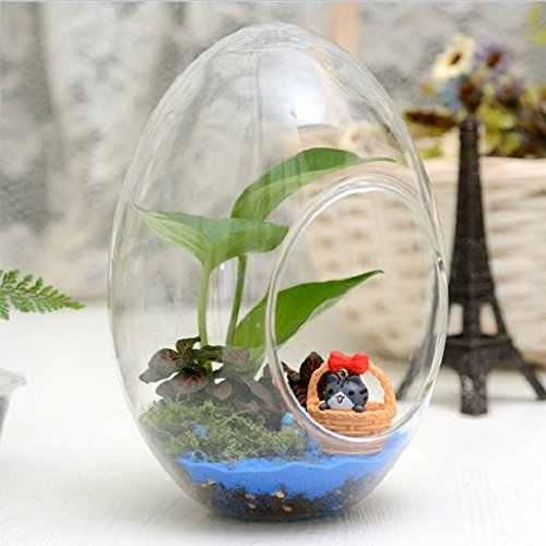 terrarium succulente achat vente de terrarium pas cher. Black Bedroom Furniture Sets. Home Design Ideas