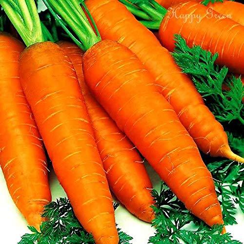 AGROBITS Gemüse - Karotten - Early Nantes 2-12 000 Samen