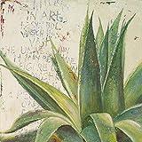 Rahmen-Kunst Keilrahmen-Bild – Patricia Pinto: Aloe I Leinwandbild Kakteen Sukkulenten Botanik