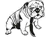 Autoaufkleber oder Wandtattoo Englische Bulldogge mit Würstchen 25x23 cm Aufkleber in verschiedenen Farben (Orange Glanz)