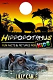 Hippopotamus: Fun Facts & Pictures For Kids