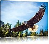 Adler Bild auf Leinwand, XXL riesige Bilder fertig gerahmt mit Keilrahmen, Kunstdruck auf Wandbild mit Rahmen, guenstiger als Gemaelde oder Bild, kein Poster oder Plakat, Format:80x60 cm