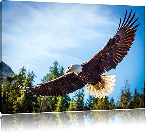 2 Gerahmte Vogel-prints (Adler Bild auf Leinwand, XXL riesige Bilder fertig gerahmt mit Keilrahmen, Kunstdruck auf Wandbild mit Rahmen, guenstiger als Gemaelde oder Bild, kein Poster oder Plakat, Format:60x40 cm)