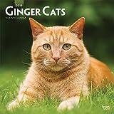 Ginger Cats - Rothaarige Katzen 2019 - 18-Monatskalender (Wall-Kalender)