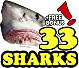 The 33 Amazing Sharks (33 Animals | Animal Fact Books for Kids Book 8) (English Edition)