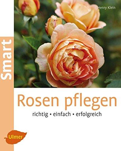 Rosen richtig pflanzen