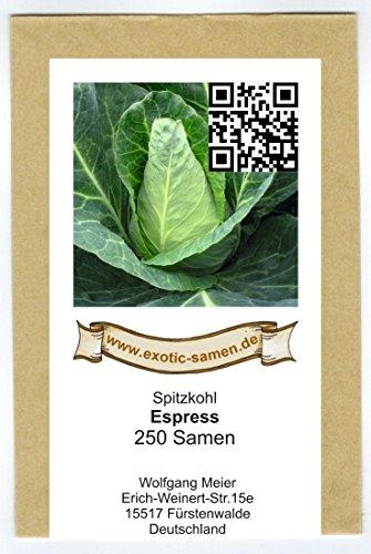 Spitzkohl – Frühe Sorte – Express – Weißkohl – 250 Samen
