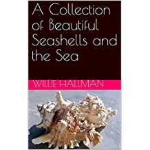 A Collection of Beautiful Seashells and the Sea (English Edition)