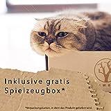 Katzenspielzeug Katzenangel Spielangel Spielmaus 3er Set Katzenbeschäftigung Kratzspielzeug Geschenkbox Stofftiere interaktives Spielzeug Katzen Zubehör Maus mit natürlichen Fasern und Federn - 6